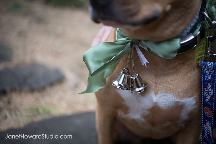 Wedding bells on ring bearing dog